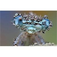 Yağmur Sonrası Böcekler Nasıl Görünür ?