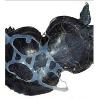 Böyle Kaplumbağa Hayatınızda Hiç Görmediniz!