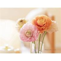 Evinizi Çiçeklerle Döşeyin...