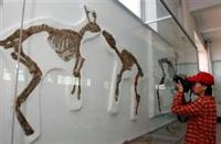 Dünyanın En Büyük Dinozor Müzesi