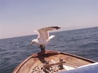 Amatör Olta Balıkçılığı