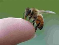 *arı Soktuyasa ...?