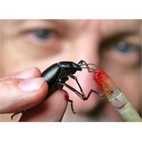 Böcekler Resim Yaparsa Ne Olur ?