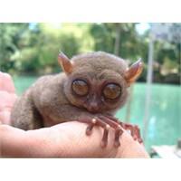 Hayvanların Gözleri