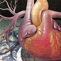Hiç Merak Ettiniz Mi! Kalp Niçin Solda..?