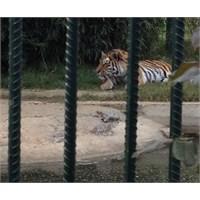 Hayvanat Bahçesi= Vicdan Azabı
