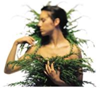 Şifalı Bitkiler Ve Cildimiz
