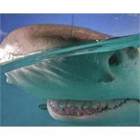 Gülümseyen Köpekbalığı