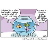 Sifona Karışan Balıklarımız