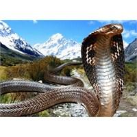 Dünyanın En Zehirli Hayvanları