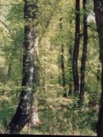 Sütçüler Sığla Ormanı Tabiatı Koruma Alanı (burdur