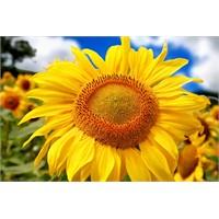 Güneş İşığı Vitamini (D Vitamini) Ömrü Uzatıyor