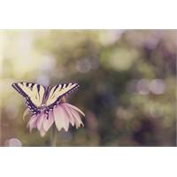 Kelebek Etkisi Beni Es Geçsin