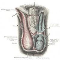 Testis Tümörü