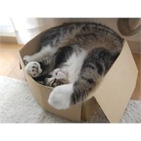 Kutu Hastası Kedi