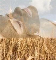 Sivilceler İçin Buğday Maskesi