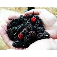 Kansızlığa Karşı Doğal Besinler