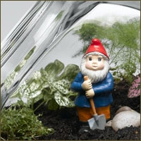 Kavanozda Mini Bahçenizi Yaratın
