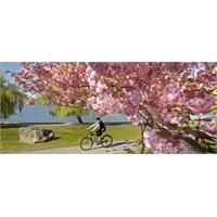İçim Bahar…