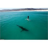 Köpekbalığıyla Aynı Suları Paylaşmak