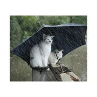 Yağmur - ( Gözlüklerim İslanmasın )