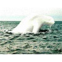 Efsane Mi Gerçek Mi? İnsansı Deniz Yaratıkları