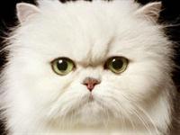 Aslında Kediler İnsanları Yönetiyor