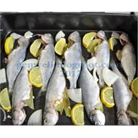 Fırında Çinekop Balığı