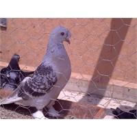 Kuşlar Ve Tatil