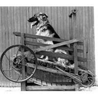 Köpek Gücüyle Çalışan Dikiş Makinesi Yapmışlar