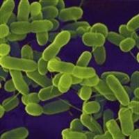 Bakterilerle Savaşa Son Verin