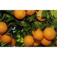 Portakal Faydaları Nelerdir?