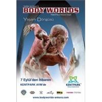 Body Worlds Ankara'da