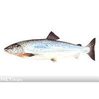 Vitamin ve mineral deposu balık!