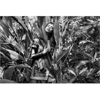 Futuristik Ormanın Efendisi: Elle Muliarchyk