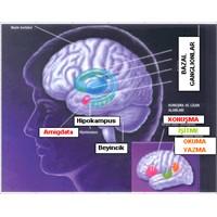 Beyin Hastalıkları Ve Bilinmesi Gerekenler
