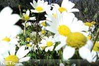 Bahar Geldi, Yanında Alerjiyi Getirdi
