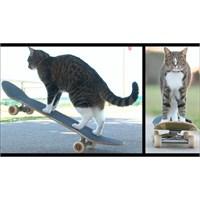 Kaykaycı Kedi Didga