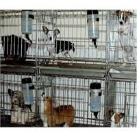Pet Shopları Nasıl Şikayet Ederiz?