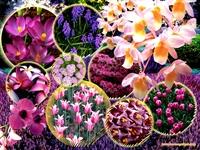 Çiçeklerin Rengaren Dili
