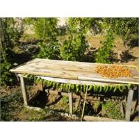 Baba Evine Ziyaret: Bahçe