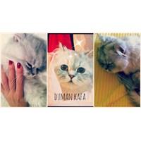 Kedim Duman'ın Aşı Zamanı
