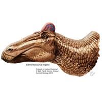Edmontosauraus'un Horoz Gibi İbiği Vardı