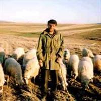Çoban Olmak İster Misiniz?