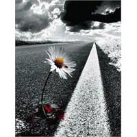 Bırak Sevdiğim … – Songül Yilmaz ( Şiirimsi )
