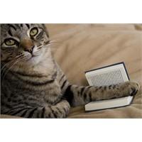 Kedilere Ve Şiirlere Dair