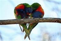 Sevgıyı Öğretmek
