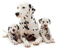 Köpek Almadan Önce Bilmeniz Gerekeler !