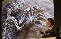 46 Milyon Yıllık Fosil Bulundu