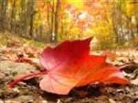 Sonbaharda Yapraklar Niçin Renk Değiştiriyor?